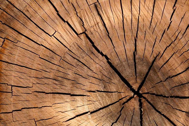 Brüchiges Holz eines Baumstammes