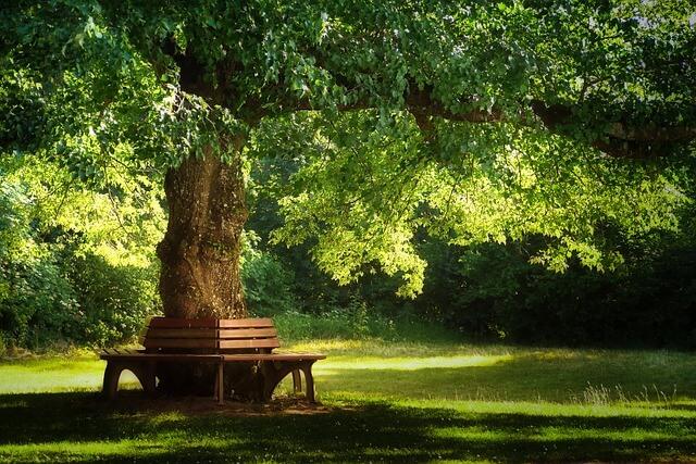 Runde Baumbank im Park
