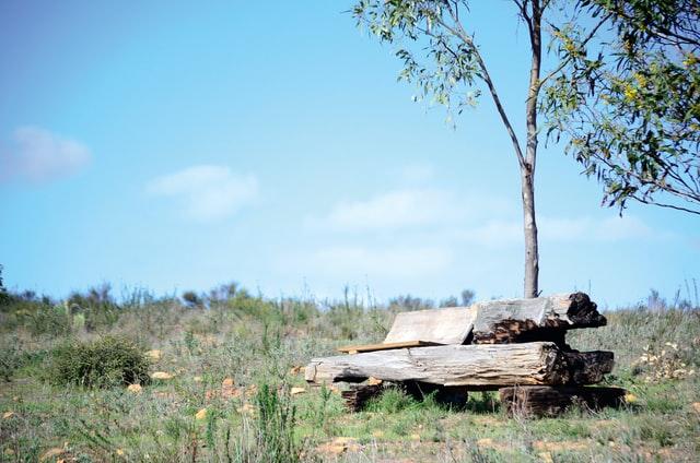 Bank aus Baumstumpf