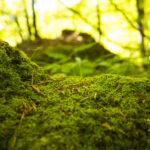 Grüner Moos auf einer Rasenfläche